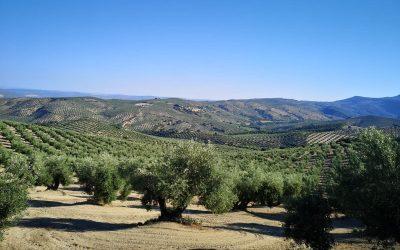 La comarca de la Sierra de Cazorla solicita un plan de choque a la Junta de Andalucía para paliar los daños que ocasionaron las tormentas de junio a los agricultores